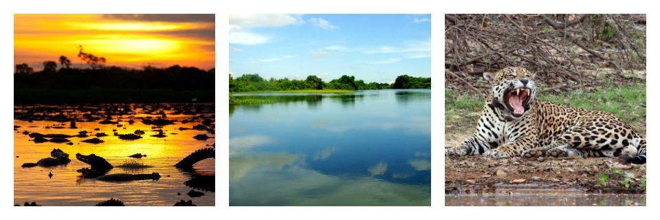 pantanal_collage