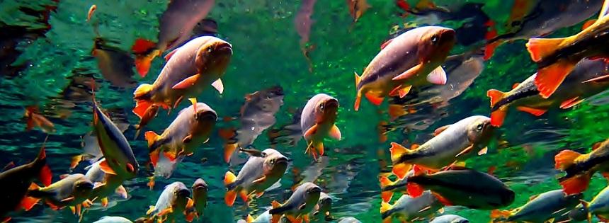 rio-bonito-piraputangas-by-mustafa_orig1